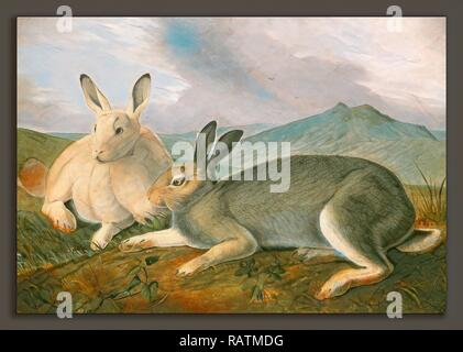 John James Audubon, Arctic Hare, American, 1785 - 1851, c. 1841, pen and black ink and graphite with watercolor and reimagined - Stock Photo