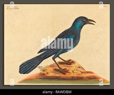 Mark Catesby (English, 1679 - 1749), The Purple Jack Daw (Gracula Quiscula), published 1731-1743, hand-colored reimagined - Stock Photo