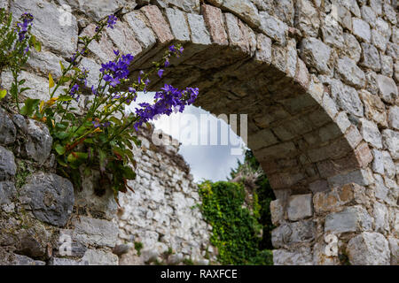 Campanula (bellflower) and old arch in the ruined city of Stari Bar, Montenegro - Stock Photo