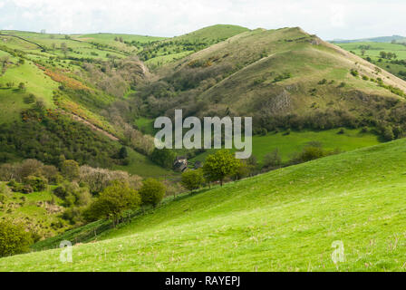 View of the Manifold Valley with Wetton Hill behind right, Dale Farm, Wetton Mill centre, from Ossoms Hill. The Peak District National Park. - Stock Photo