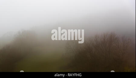 A meadow with a few trees in the thick fog - Stock Photo