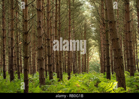 UK, Sherwood Forrest, Nottinghamshire  Birds of Prey Event - UK, Sherwood Forrest, Nottinghamshire in October - Stock Photo