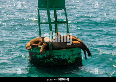 Group of seals including two babies sleep on a green buoy in the ocean off of the California coast - Stock Photo