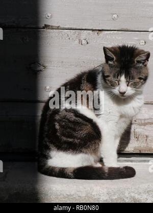 Cat enjoying the sun to take a nap in Luberon - Stock Photo
