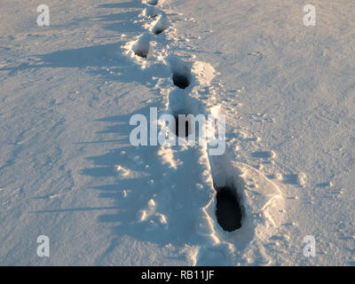 Wet footsteps in snow at frozen lake with water layer. - Stock Photo