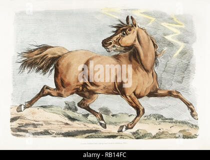 Illustration of a brown horse running from Sporting Sketches (1817-1818) by Henry Alken (1784-1851). Original from The New York Public Library. Digitally enhanced by rawpixel. - Stock Photo