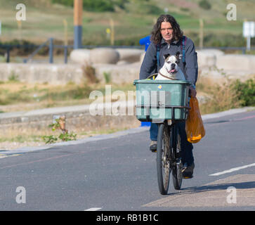 A man taking a dog in a basket on a bicycle ride along a seafront promenade in Summer in the UK. Cyclist with a dog in a basket. - Stock Photo