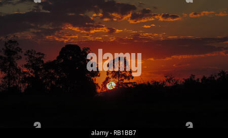 A reddish and cloudy sundown behind trees with ground and plants silhouettes - Stock Photo