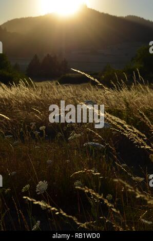 Summer grasses glowing in setting sun over butte. - Stock Photo