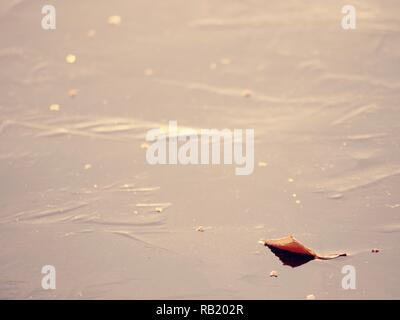 Leaves cruise on thin ice. Dark ice on the river . Dried leaf is on the ice. Autumn landscape - Stock Photo