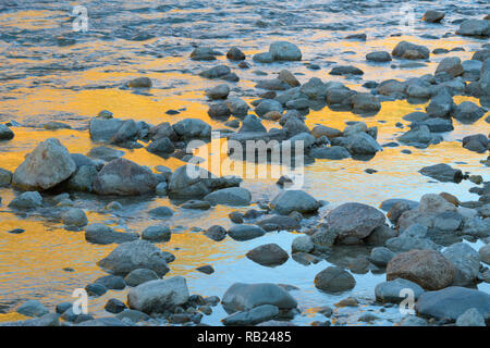 Stones on mountain stream with reflecting larches in the water, autumn, Morteratsch valley, Pontresina, Engadin, Grisons, Switzerland, European Alps - Stock Photo
