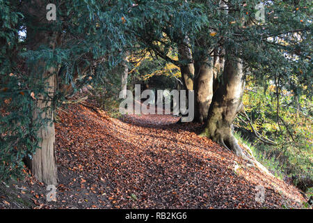 A beautiful holloway path on Wilmot's Hill on the National Trust's Ightham Mote estate near Knole Park and Sevenoaks, in autumn - Stock Photo