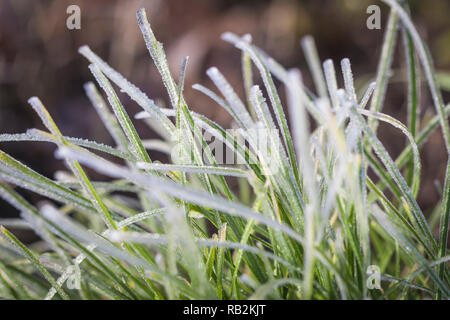 macro photograph of iced grass leaves - Stock Photo