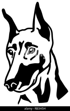 Doberman head black and white - Stock Photo