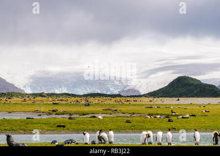 Salisbury Plains in front of a giant glacier. - Stock Photo