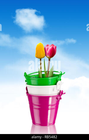 colorful tulips in colorful iron pots with clipping path - Stock Photo