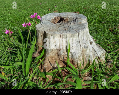 A bench in the park made of a dry and cut tree stump rooted on a green lawn with some flowers next to it - Stock Photo