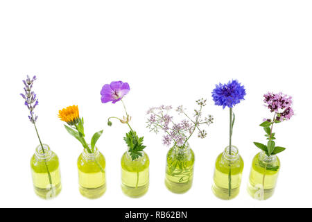 Different healing flowers in small glass bottles on white - Stock Photo