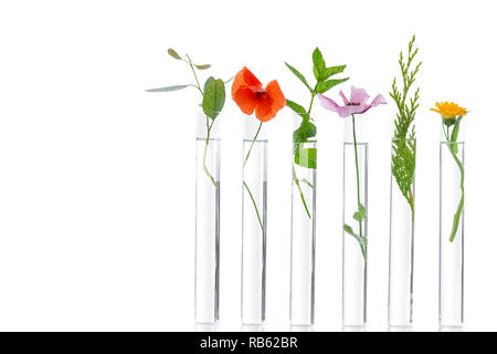 Beautiful flowers on test tube in laboratory, scientist experiment on biology and chemistry. - Stock Photo