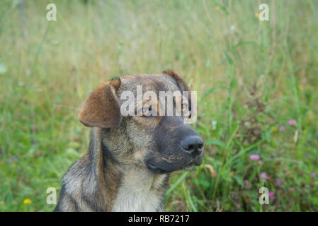 Portrait of a cute brown stray dog - Stock Photo