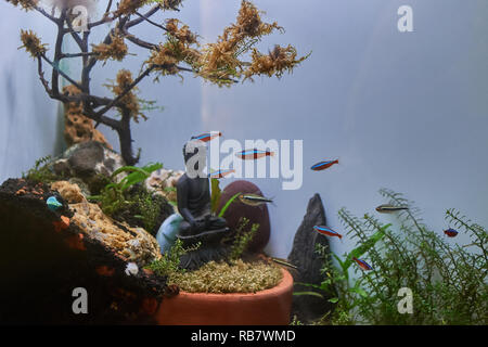 21-Apr-2018-Tropical colorful fishes swimming in aquarium with plants and buddha stone statue Kandivali Mumbai Maharashtra INDIA asia - Stock Photo