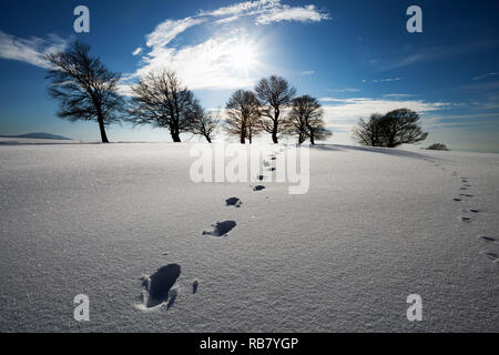 Spuren im Schnee - Stock Photo