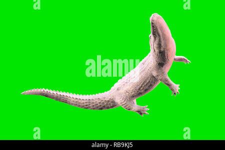 3D Illustration of albino American alligator isolated on green background, American crocodile - Stock Photo