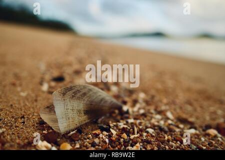 Close up of a shell on an isolated beach, Smalleys Beach Camp Ground, Cape Hillsborough National Park, Qld, Australia