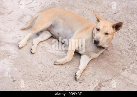 Dog sitting on a concrete floor - Stock Photo