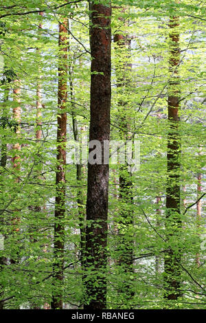 Dense green altitude forest from Portuguese beautiful natural park of Peneda-Geres - Stock Photo