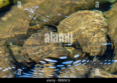 ripples form a pattern on the surface of fresh water over rock in clear river in summer - Stock Photo