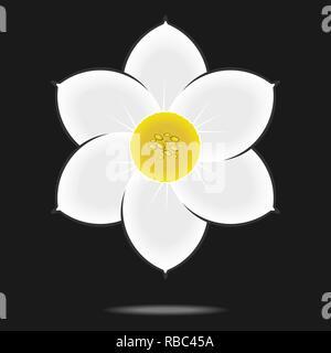 Narcissus flower isolated on  black background. - Stock Photo