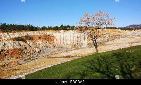 Melia azedarach planted in mining land with a very low Ph with blue sky in background - Stock Photo