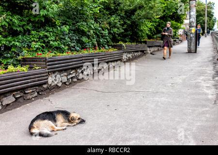 Rivne, Ukraine - July 3, 2018: Soborna street in Rovno city in western Ukraine, outdoor park in summer, people walking on sidewalk, stray sad dog - Stock Photo