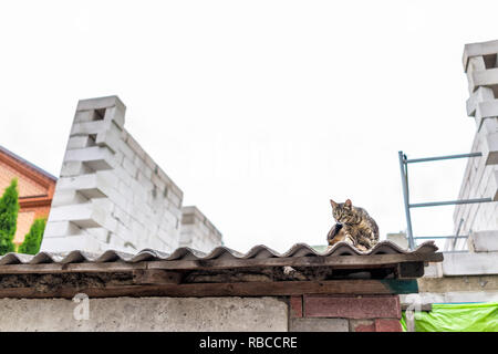 Funny stray tabby one cat grooming scratching sitting on roof of building house street in Rivne, Ukraine or Russia, low angle view