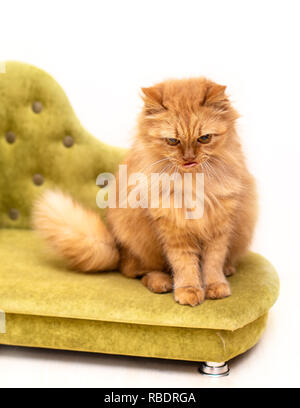 Red funny cat in cofa isolated on white background - Stock Photo