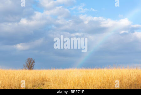Rainbow over a wheat field in the late day sun - Stock Photo