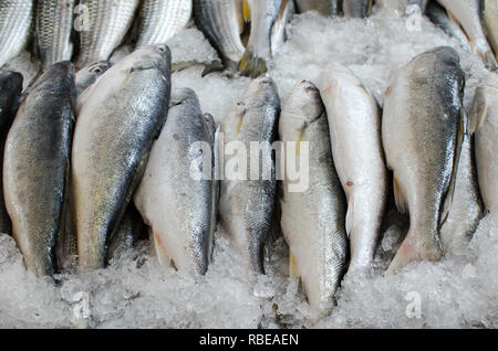 Fresh fish for sale at the Panama City Seafood Market - Stock Photo