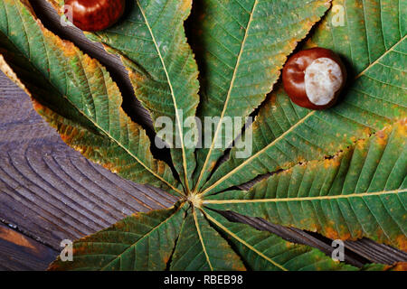 Chestnuts on the leaf. Close-up - Stock Photo