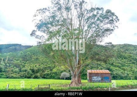 TAKAKA NEW ZEALAND - OCTOBER 6 2018; Graffiti painted on old rustic corrugated Iron farm shed under large eucalyptus tree by main highway through rura - Stock Photo