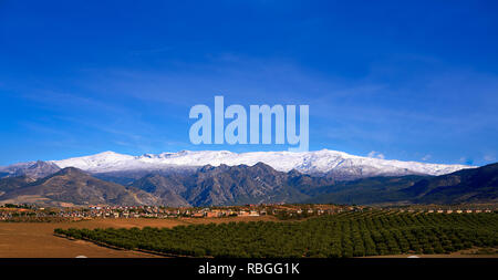 Sierra Nevada mountains in Granada with snow on tip and olive tree fields of Andalusia - Stock Photo