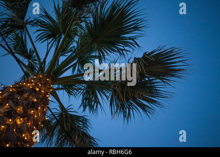 Upward Angle View of Palm Tree under Blue Sky. Cable Wire Hanging Low Beneath the Leaves. Tiny LED Lights Glittering around the Trunk. Venue Design Id - Stock Photo