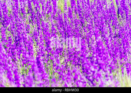 Purple spring -summer background with small flowers. Soft focus - Stock Photo