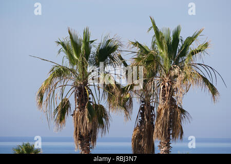 View over palm trees to the ocean - Stock Photo