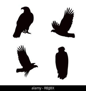 bald eagles birds silhouettes set poses vector