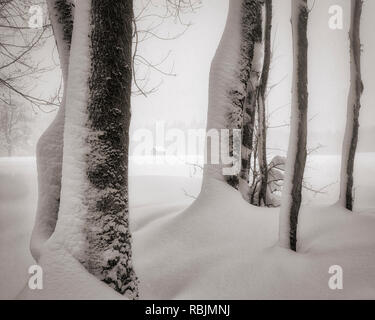 DE - BAVARIA: Wintertime near Bad Tölz - Stock Photo