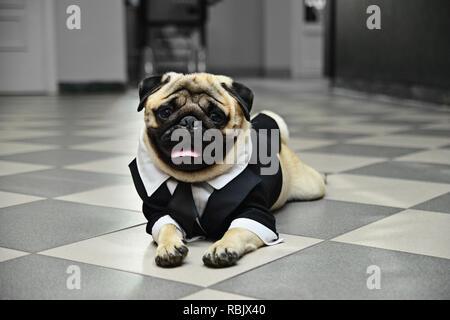 Dog in costume - Stock Photo
