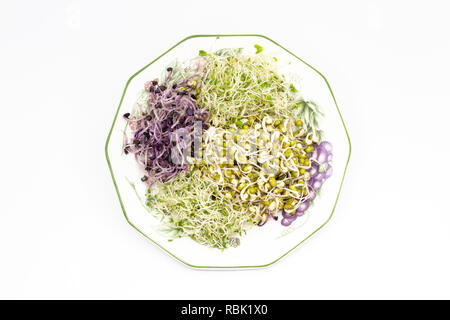 Radish, mung bean, alfalfa and clover sprouts on plate - Stock Photo
