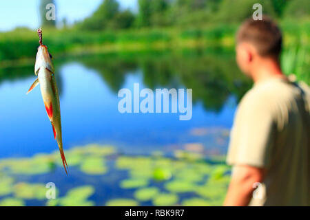 Common rudd ?aught on pond. Caught fish. Freshly caught fish common rudd and fisherman in background. Fishing concept - Stock Photo