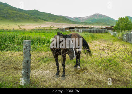 Farming in the Altai Mountains on a field with a lot of haystacks at harvest time with a black lonely horse in a pen with an iron fence - Stock Photo